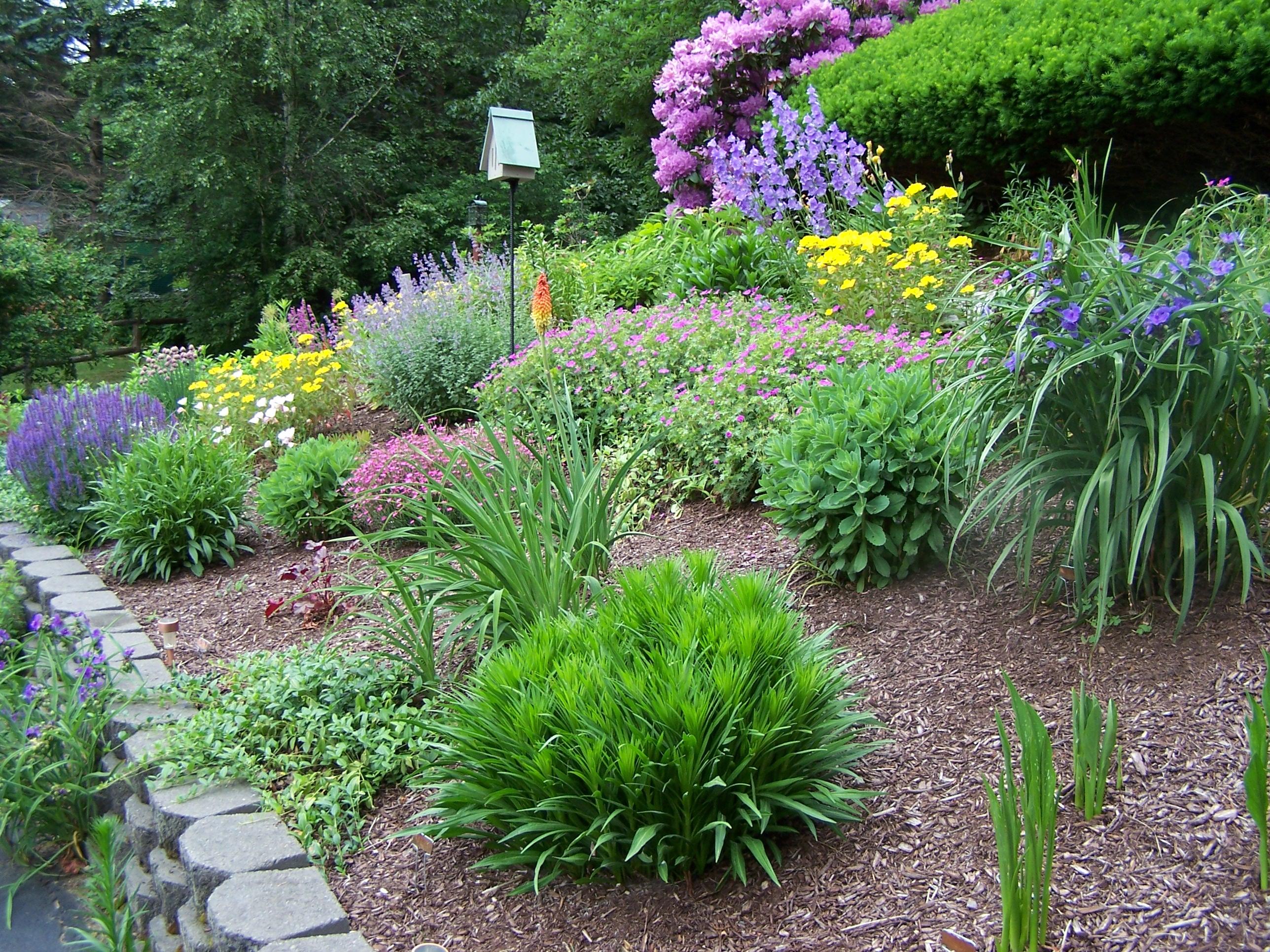 perenial garden